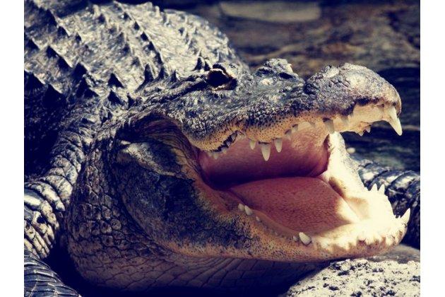 """Фирменная неповторимая экзотическая панель-крышка обтянутая кожей крокодила с фактурным тиснением для Huawei Mate 20 6.53 тематика """"Тропический Коктейль"""" в коричневом цвете. Только в нашем магазине. Количество ограничено."""