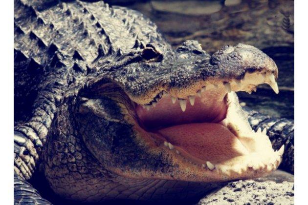 """Фирменная роскошная эксклюзивная накладка с объёмным 3D изображением рельефа кожи крокодила коричневая для HTC Desire 530 / Desire 630 Dual SIm ( LTE 4G / 530U / EEA) 5.0"""". Только в нашем магазине. Количество ограничено"""