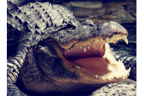 Фирменный роскошный эксклюзивный чехол с объёмным 3D изображением кожи крокодила коричневый для Jiayu S3 . Только в нашем магазине. Количество ограничено