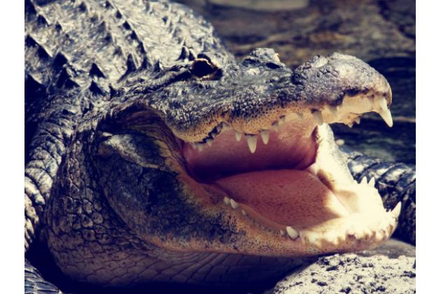 """Фирменный роскошный эксклюзивный чехол с фактурной прошивкой рельефа кожи крокодила и визитницей черный для LG X View LGK500DS / X Screen K500Y 4.93"""". Только в нашем магазине. Количество ограничено"""