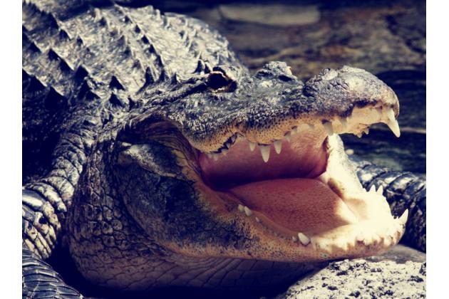 Фирменный роскошный эксклюзивный чехол с объёмным 3D изображением кожи крокодила коричневый для Oppo R7 . Только в нашем магазине. Количество ограничено