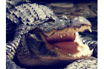 """Фирменная неповторимая экзотическая панель-крышка обтянутая кожей крокодила с фактурным тиснением для HTC Bolt/HTC Desire 10/ Desire 10 Lifestylle тематика """"Тропический Коктейль"""". Только в нашем магазине. Количество ограничено."""