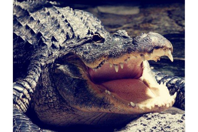 Фирменный роскошный эксклюзивный чехол с объёмным 3D изображением рельефа кожи крокодила коричневый для Samsung Galaxy Note 2 N7100. Только в нашем магазине. Количество ограничено