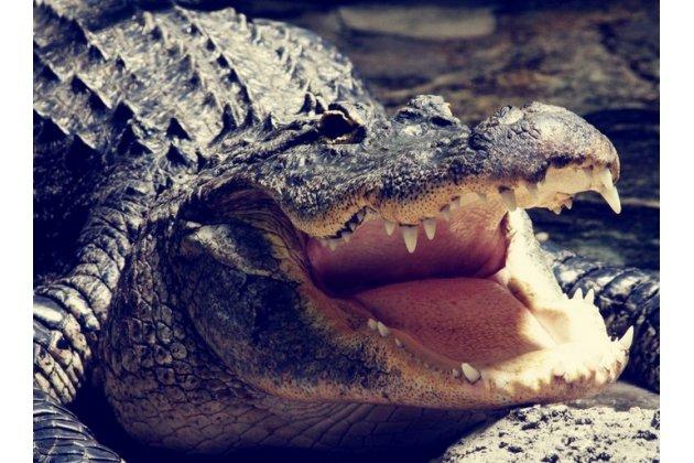 Фирменная неповторимая экзотическая панель-крышка обтянутая кожей крокодила с фактурным тиснением для ZTE Nubia Z7 Mini  . Только в нашем магазине. Количество ограничено.