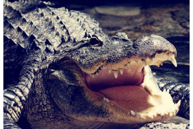 Фирменный роскошный эксклюзивный чехол с объёмным 3D изображением кожи крокодила черный для Philips Xenium X818 / Philips X818  Только в нашем магазине. Количество ограничено