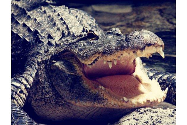 """Фирменный роскошный эксклюзивный чехол с объёмным 3D изображением кожи крокодила черный для Huawei Honor 8X (JSN-L21) 6.5"""". Только в нашем магазине. Количество ограничено"""